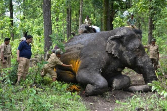Gajah mengamuk, 15 jadi korban