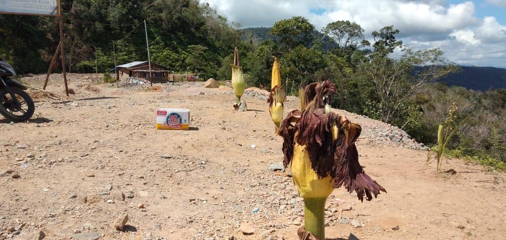 Bunga Bangkai di Bantai, Demi Kepentingan Pribadi