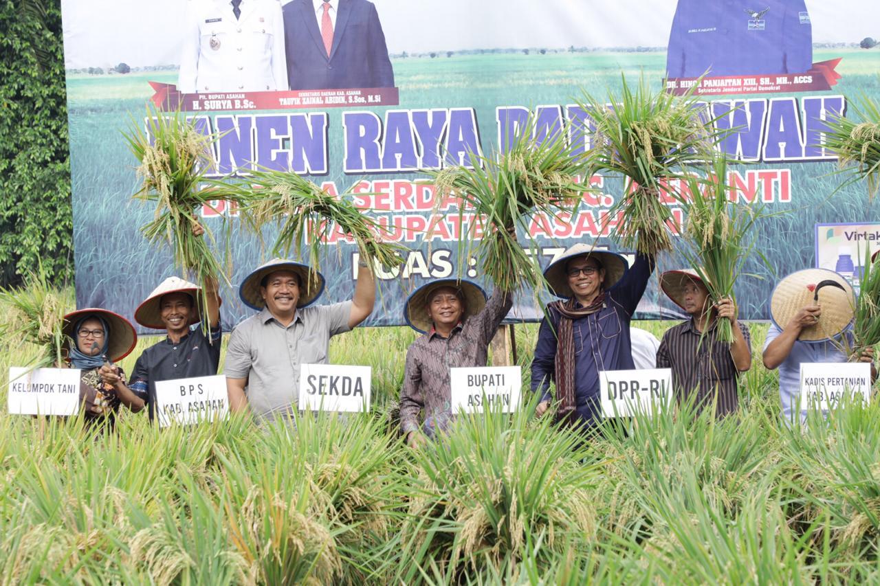 Plt Bupati Asahan Hadiri Panen Raya Padi Sawah di Desa Serdang
