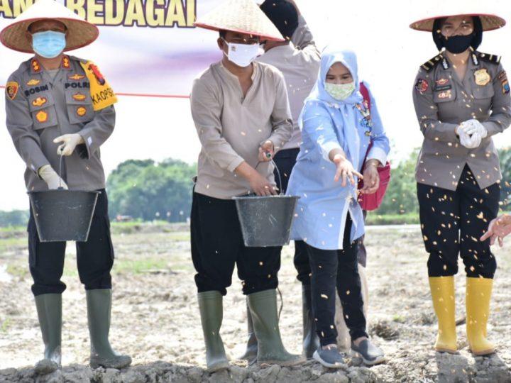 Tabur Benih Padi di Lahan 20 Hektar Sawah Baru, Wabup Sergai : Keuntungan Dari Panen Akan Disumbangkan pada Masyarakat Kurang Mampu