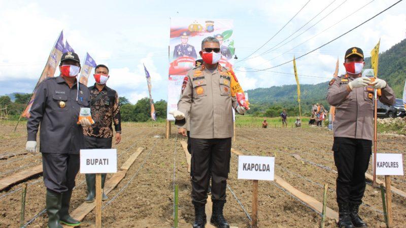 Kapoldasu Bantu Masyarakat Tanam Jagung di Samosir