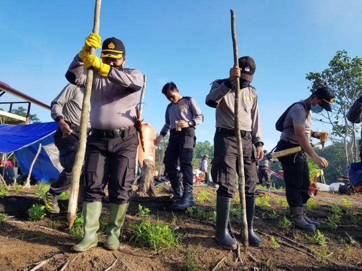 Lahan Seluas 7,5 Hektar Milik Primkopol Polres Kutai Kartanegara Ditanami Benih Padi