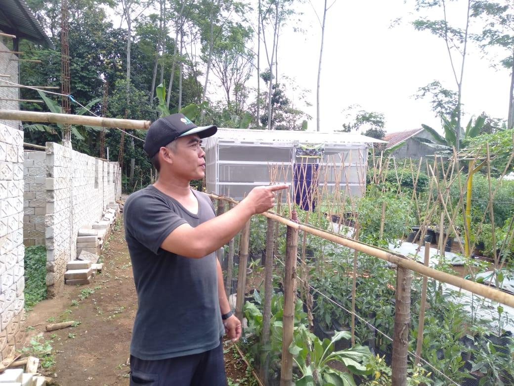 Berdampak Ekonomi Perdesaan, Kades Sindangsari Bangga Jalankan Program Budidaya Percontohan Sayuran
