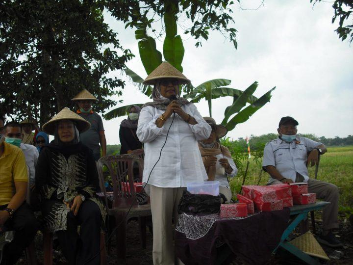 Nomor Urut 1,Ikut Panen Raya Di Dua Desa Di Kabupaten Musi Rawas