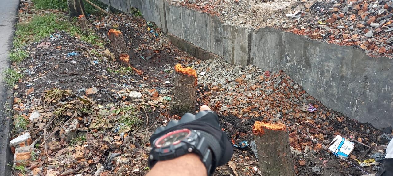 Komisi IV DPRD  Minta Dinas Pertamanan dan Kebersihan Cek Penebangan Pohon di Jalan Aluminium Raya