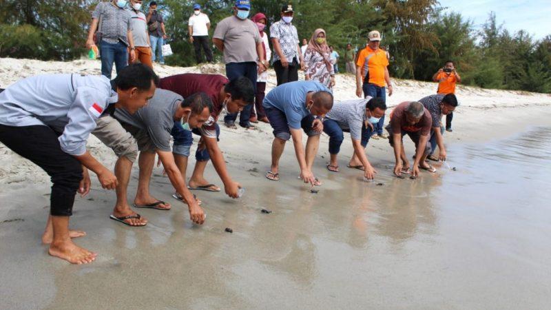 Terancam Punah, Bupati Tapteng Rilis 115 Ekor Tukik Penyu Lekang di Pantai Binasi